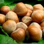 Le nocciole del Piemonte Igp