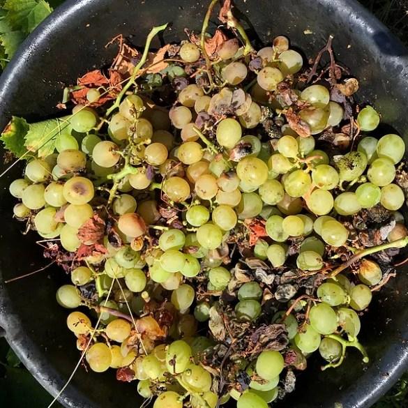 Di stagione a settembre: frutta, pesce e verdure da comprare