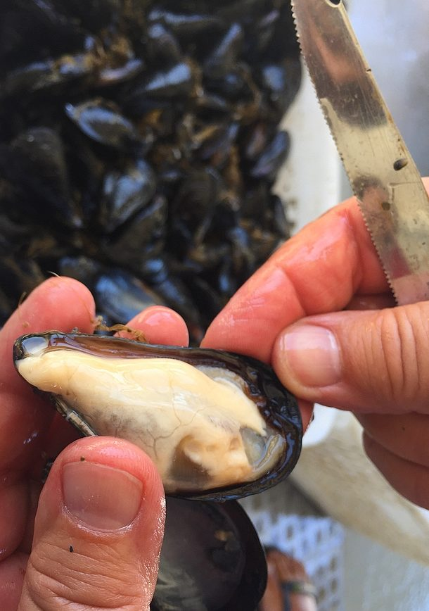 The mussels made in Sardinia Nieddittas: from the sea to the table