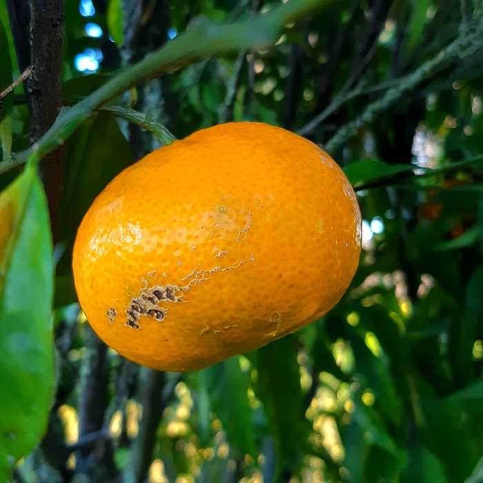Seasonal: fruit, vegetables and fish to buy in December
