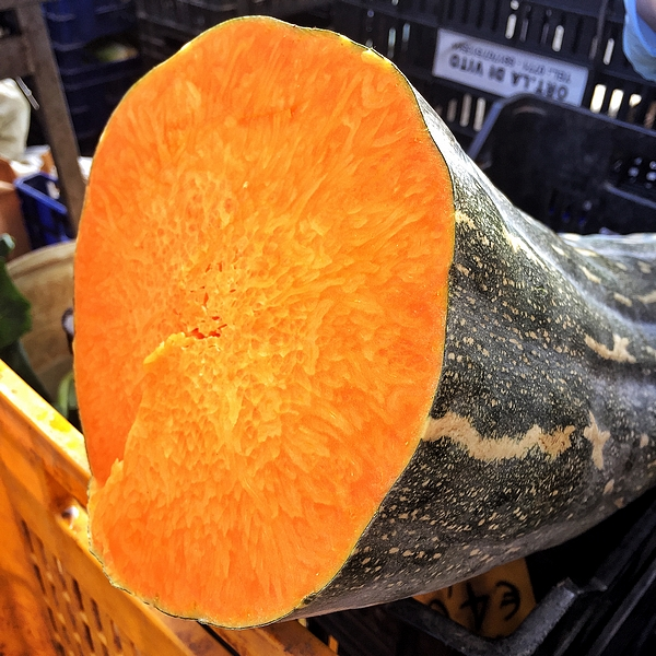 Naples long pumpkin can weigh up to 25 kilos, Slow Food