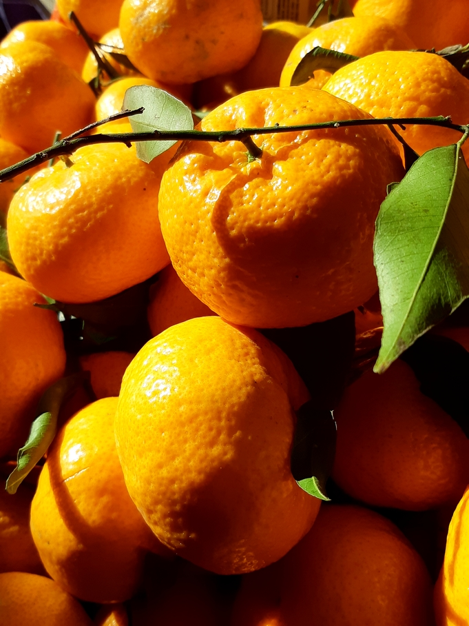 Mandarins, season in December