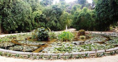 #Palermo. I giardinieri dell'Orto Botanico incrociano rastrelli e vanghe