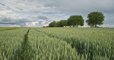 #Sicilia. Insediata nuova Commissione ARS su sementi autoctone e grani antichi