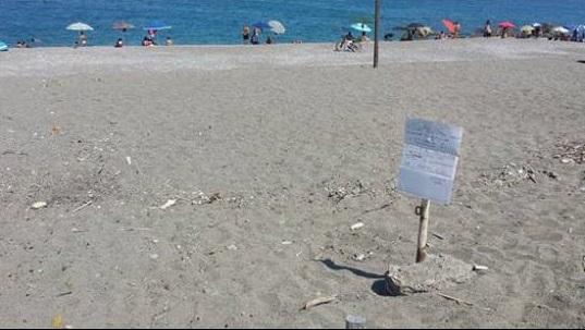 #Messina. Topi e rifiuti nelle spiagge di Barcellona