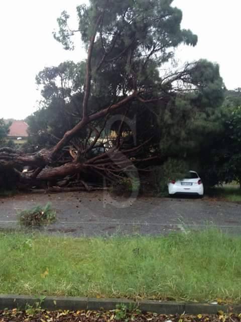 #Messina. Pino del Mandalari crolla su tre auto in sosta