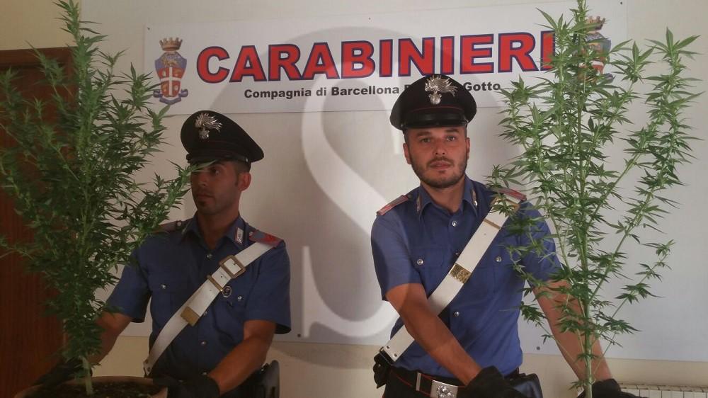 #Barcellona. Coltivava droga in casa, arrestato 48enne