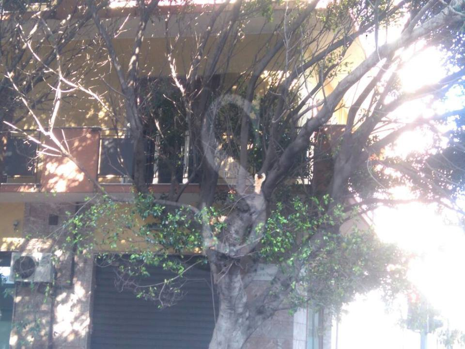 #Messina. Verde cittadino a pezzi: grosso ramo si schianta sul marciapiede