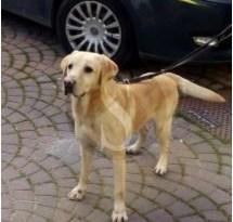 #Cronaca. Cane antidroga fa arrestare alla stazione FS di Agrigento pusher pregiudicato