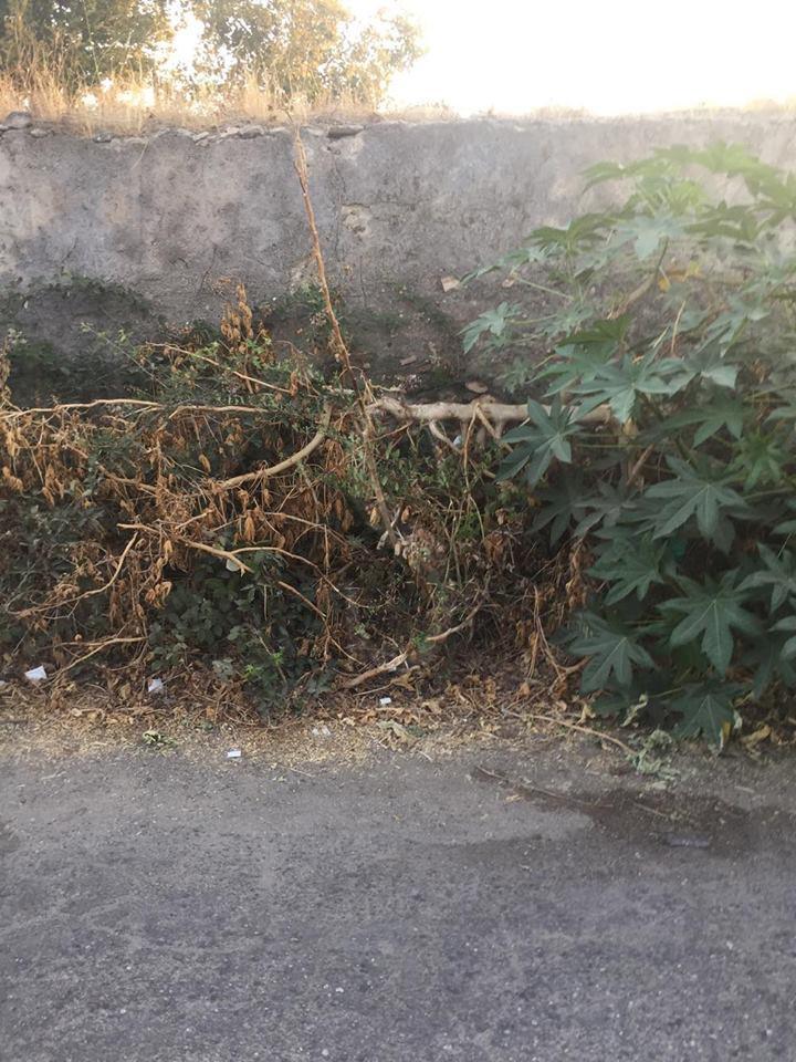 #Cronaca. Barcellona Pozzo di Gotto, topi e blatte in via degli Artigiani