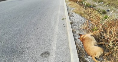 Cronaca. Orrore a Terme Vigliatore, il cadavere di un cane investito abbandonato da giorni