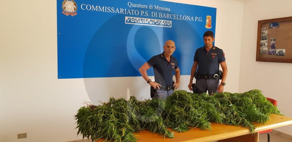 Cronaca. Castroreale, coltivava piante di marijuana: la Polizia di Barcellona PG arresta 35enne