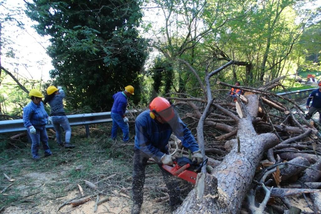 Cronaca. Messina, Colli Sarrizzo: abbattuti alberi a rischio crollo