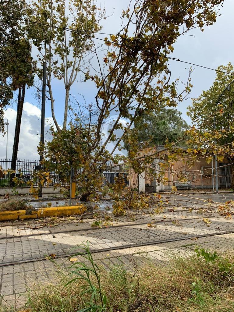 Tragedia sfiorata a Messina: albero si schianta su 3 auto ferme al semaforo