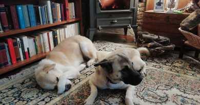 Emergenza coronavirus, gli animali domestici vittime dello scontro tra De Luca e Musumeci