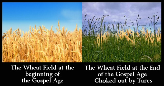 wheat-and-tares-1-copy