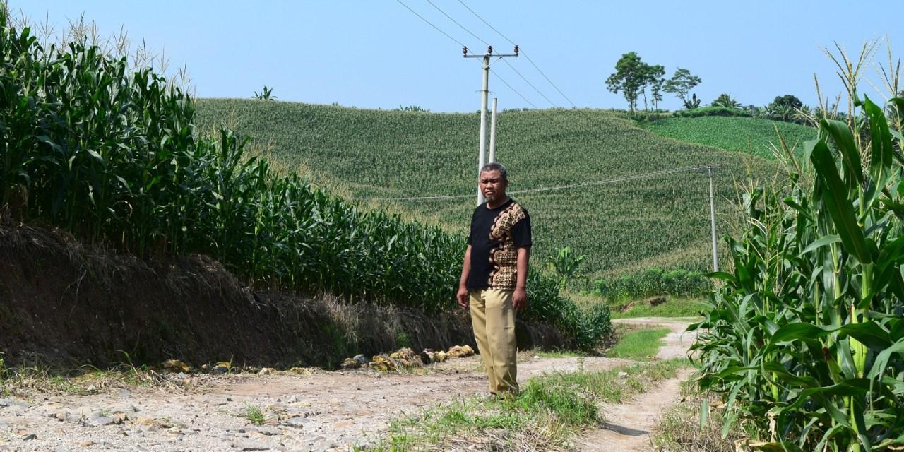 Pernah Berjaya Dengan Kebun Kelapa, Komoditas Jagung Kini Unggulan Sukabhakti (Contoh Potensi Desa)