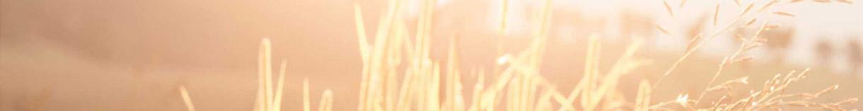 Gräser mit Landschaft im Hintergrund
