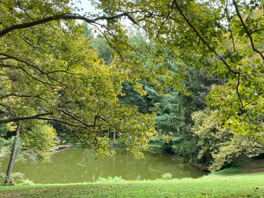 A quiet pond on the garden's eastern side is surrounded by different kinds of trees.
