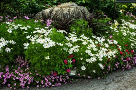 A mixed garden