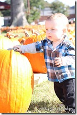 pumpkin-patch-baby-5240