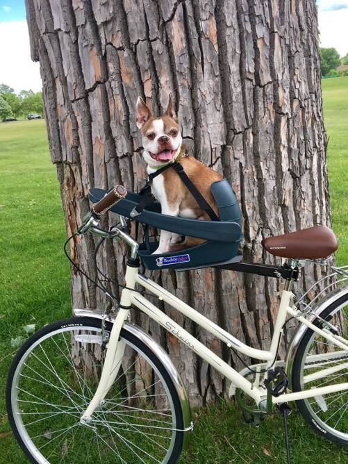how to bike with a dog