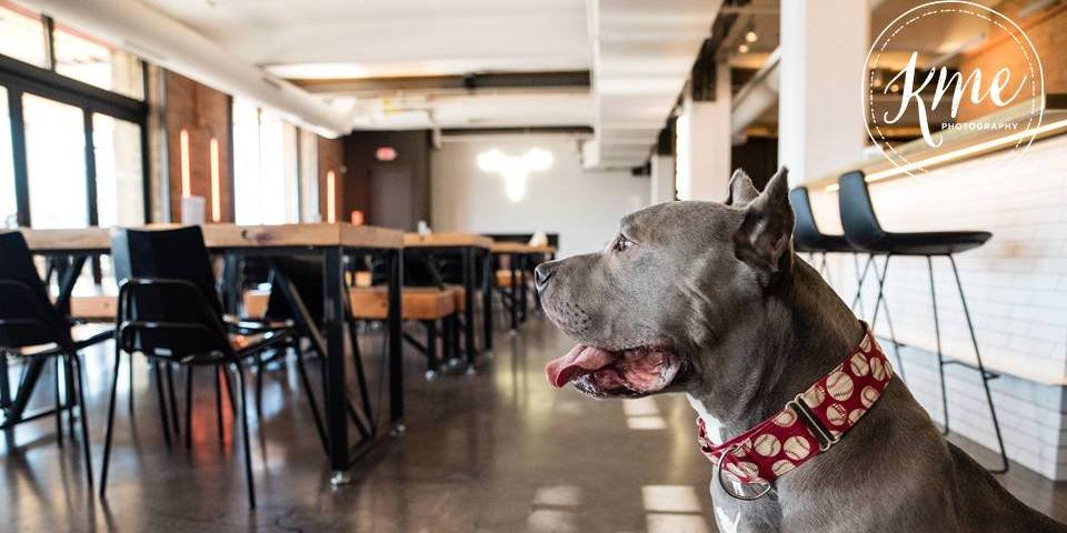 events dog friendly breweries mn