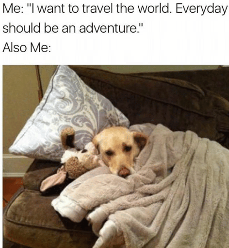 dog meme adventure