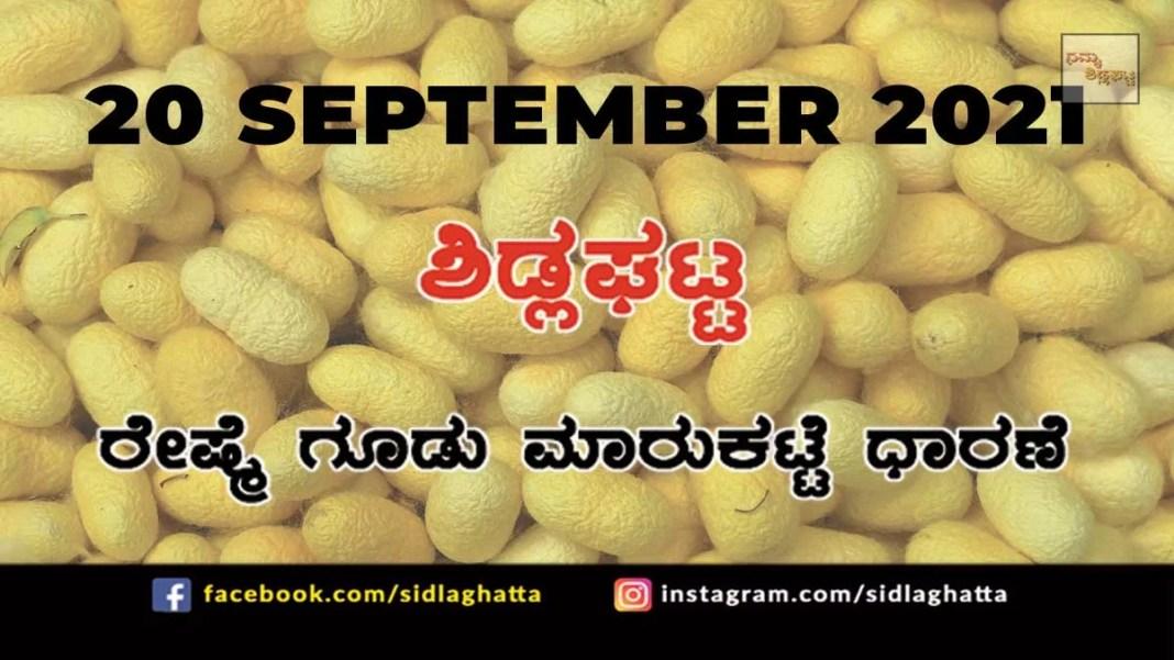 Chikkaballapur District Sidlaghatta silk Cocoon Market Daily Rate