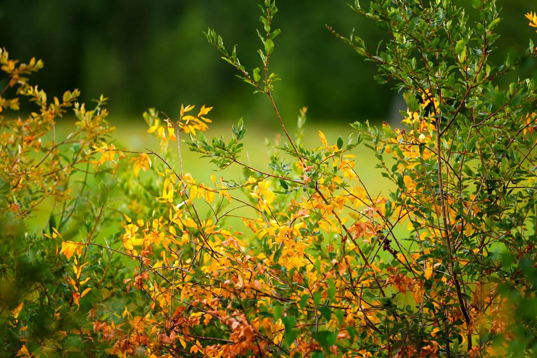 Elk Island National Park summer flora, Alberta nature landscape.