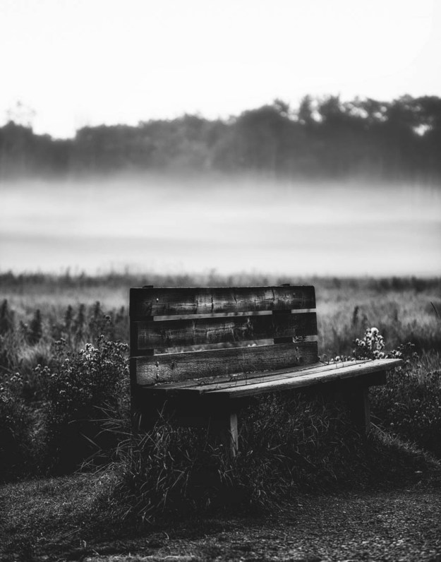 A weathered wooden bench rests amongst deep vegetation during a foggy summer morning, black and white fine art Alberta landscape.