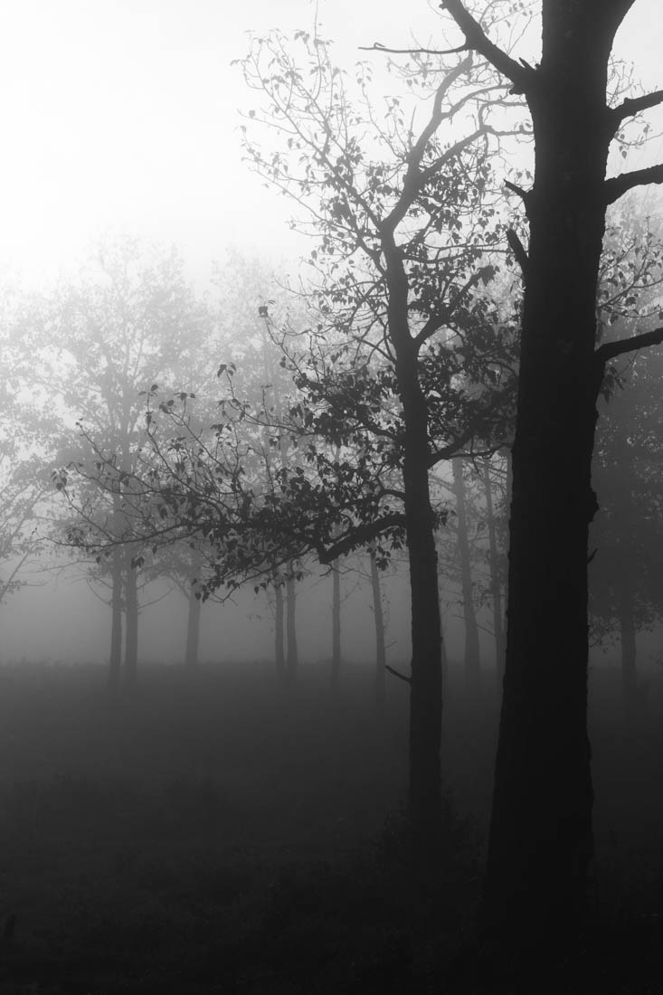 Foggy black and white autumn sunrise over the bison loop at elk island national park