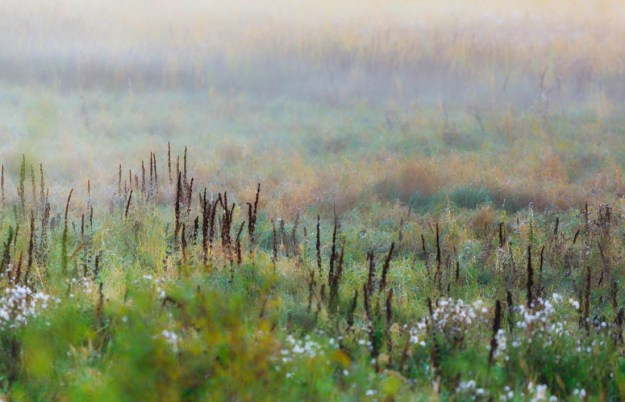 Foggy meadow along the Tawayik Lake Trail during sunrise at Elk Island National Park, Alberta landscape.