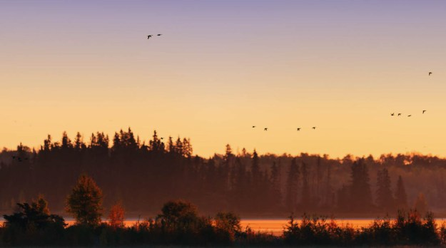 Astotin Lake with Canadian geese flying against the rising sun during an autumn sunrise at Elk Island National Park, Alberta landscape.