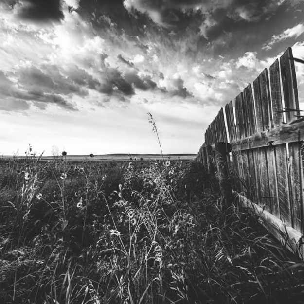 A wooden fence lines a field of wild flowers and tall grass blowing in the late summer wind, southern Alberta black and white landscape.