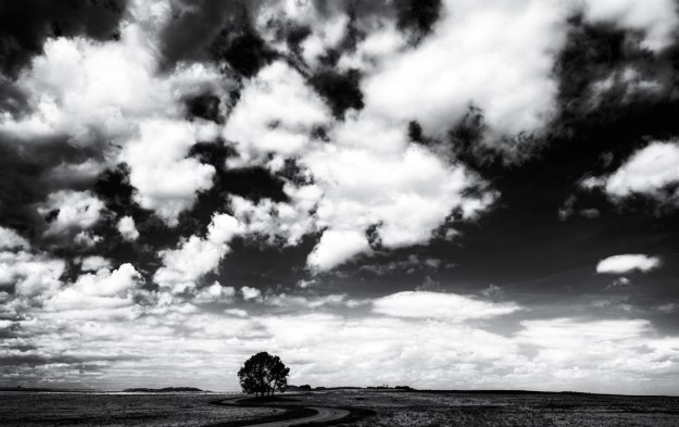 Black and white Southern Alberta landscape of a lone tree and windy road during an early afternoon in spring. Copy space horizontal.