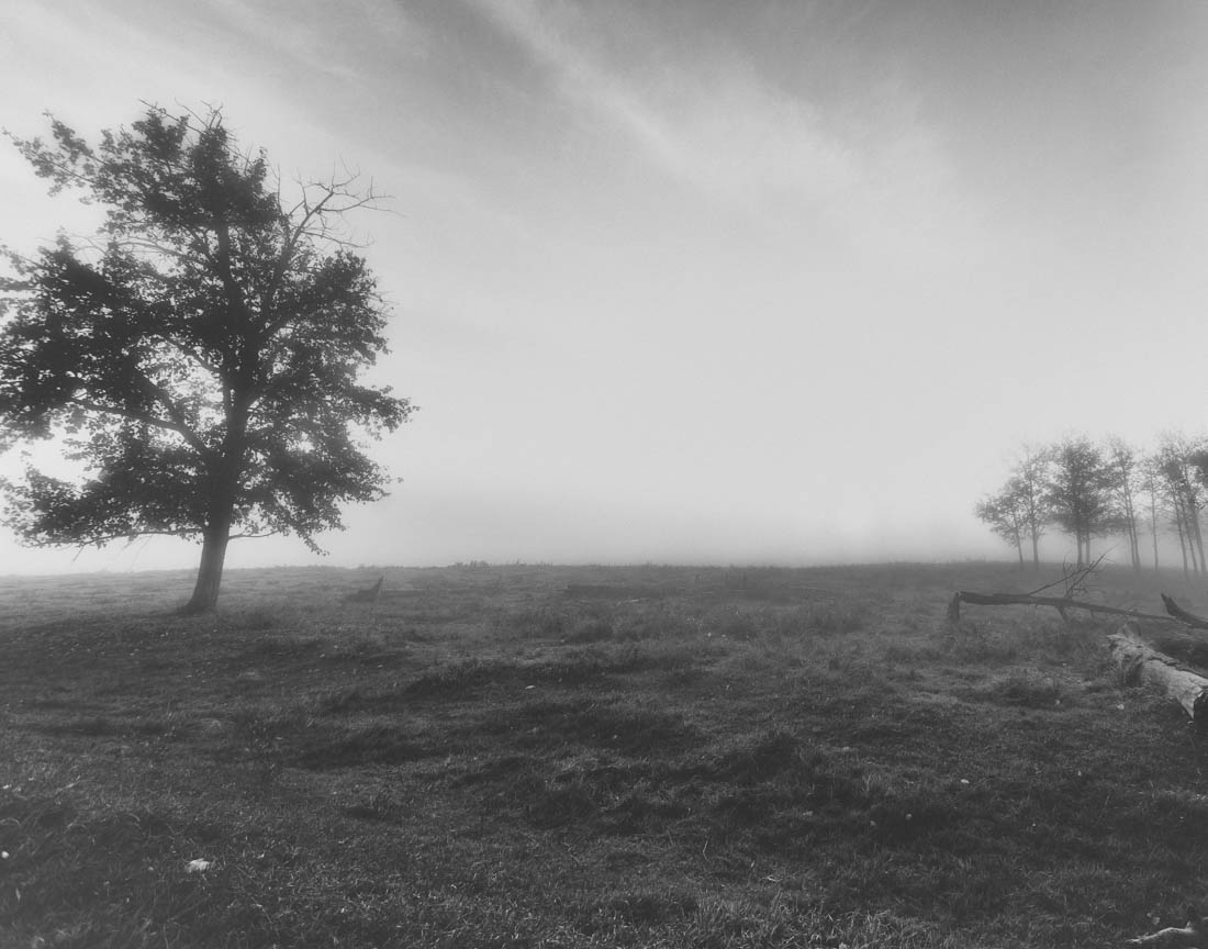 Pea-soup foggy morning at Elk Island National Park, black and white Alberta landscape.