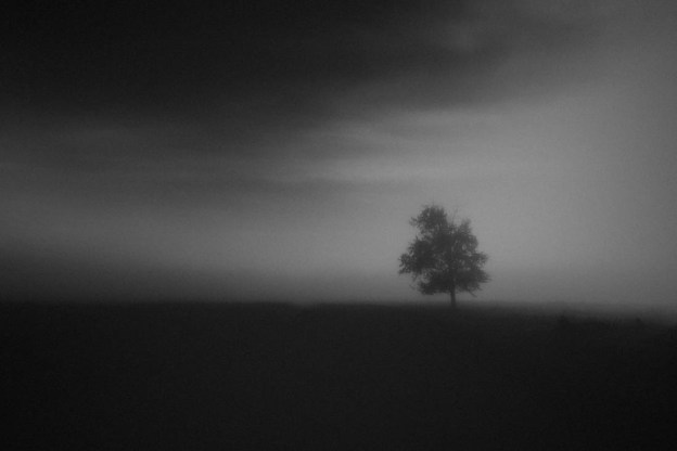 Black and white lone tree along a gravel road during a pea-soup foggy autumn morning, Alberta landscape.