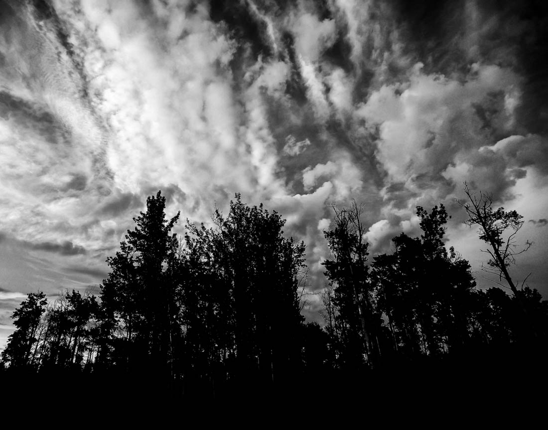 Black and white landscape of trees and clouds at Elk Island.