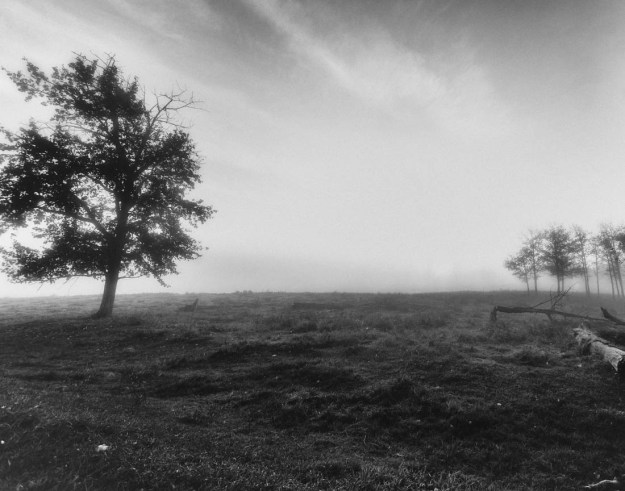 Pea-soup foggy autumn morning, black and white Alberta landscape.