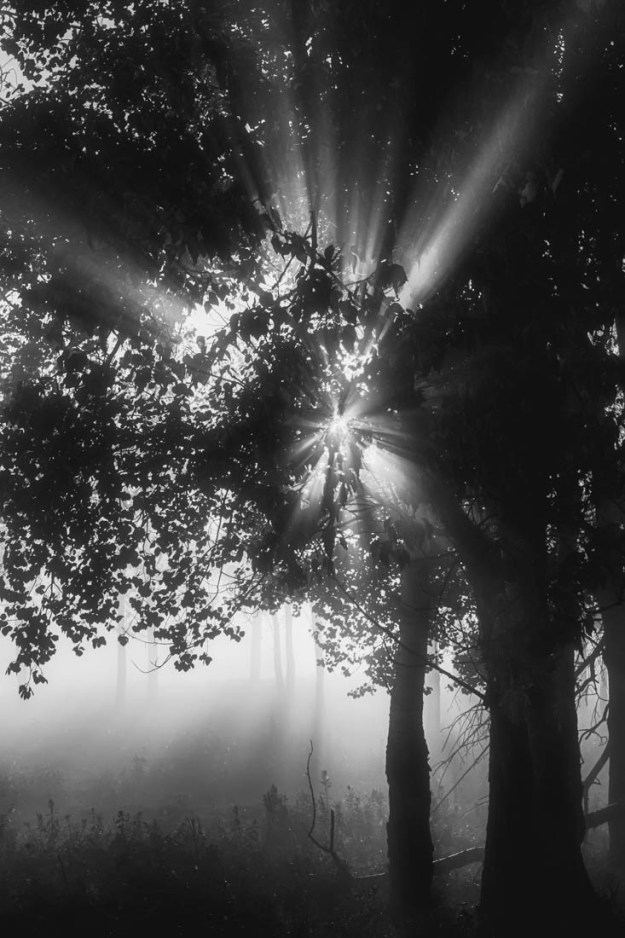 A foggy sunrise with sun rays glowing through the trees, black and white fine art Alberta landscape.