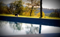 Image of the pool at Siena House taken when the sun is low and cat is strolling along the edge