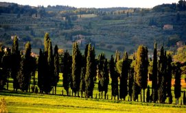 In the Province of Siena