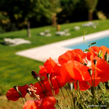 Image of the pool taken from the top lawns with a few loingers and green grass