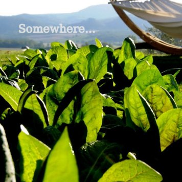 Image of a back lit hammock, cropped, on a lawn against a tuscan view of hills and oak woods showing rich emerald green baby lettuce plants in the foreground and the word 'somewhere' placed on the view close to top at left