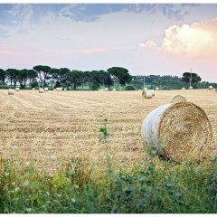 Image of a tuscan hay field showing a hay bale in June