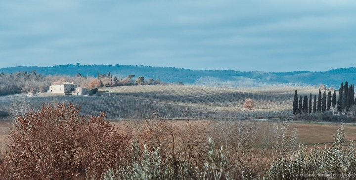 Image showing a winter tuscany view of siena countryside coloured mainly in sienna red, ochre and umber with cobalt and azure blue tones in the sky and distant hills the foreground shows olive tree tops at siena house and the mid ground shows vines and houses of locanda dell amorosa boutique hotel at sinalunga