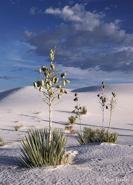 The White Sands Backpacking Trail has many photos opps.