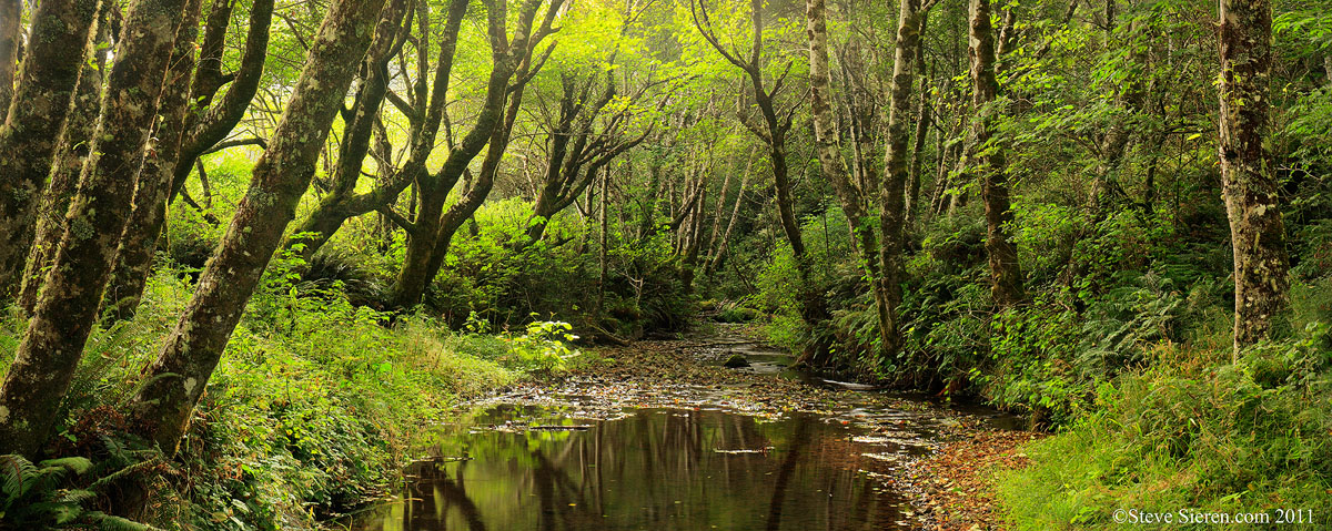 A lush covered creek along California's Lost Coast trail.