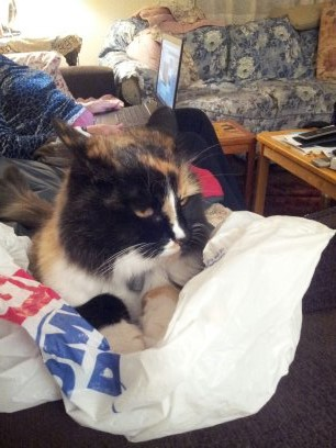 9/7/16 I am a good cat, I live with Victoria and Paul, they went away and left me here, I am still here and they will understand about paybacks when they get home...